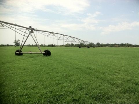 The irrigation pivots